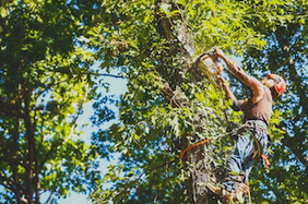 tree removal service Tampa